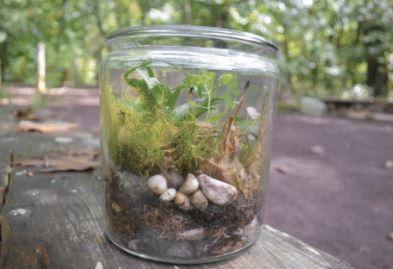 Growing Native Plants Make And Take Terrarium Garden Bowman S