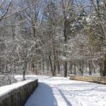 Nature in Winter Walk