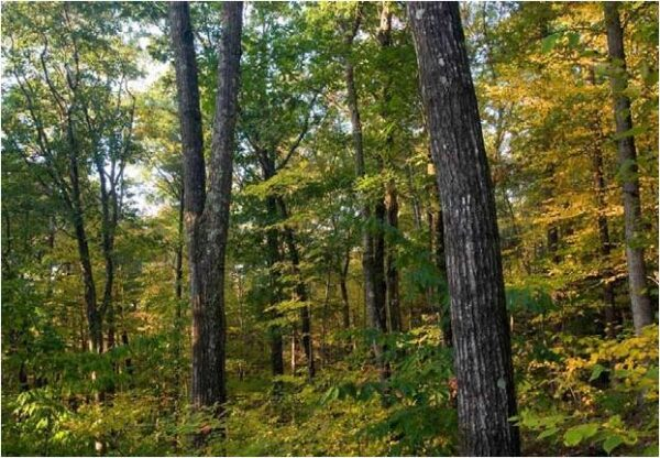 The Healing Power of Nature | BHWP Winter Lecture Series